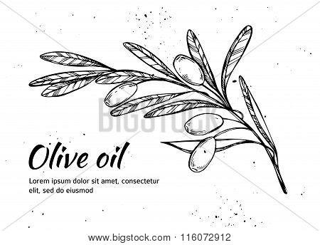 Hand Drawn Vector Illustration - Olive Branch. Olive Oil. Vintage