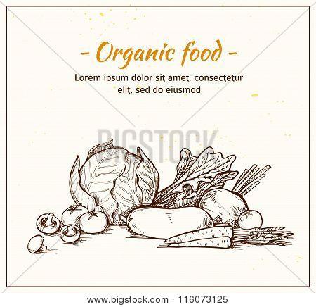Hand Drawn Vector Illustration -fresh Vegetables. Supermarket. Grocery Store. Organic And Vegan Food
