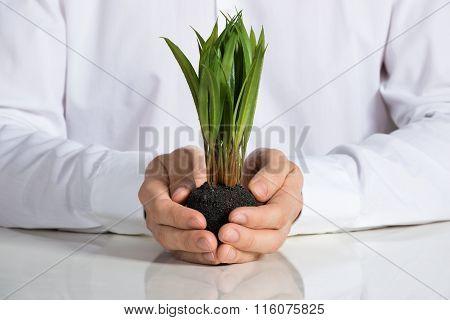 Businessman Holding Sapling