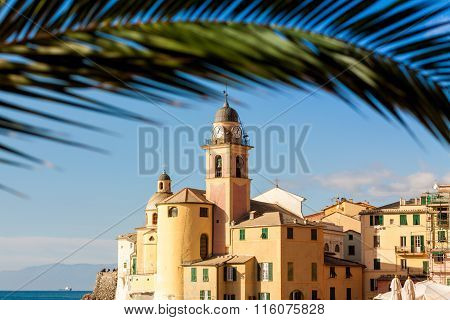 Palm Framed Church In Camogli, Near Genoa, Italy