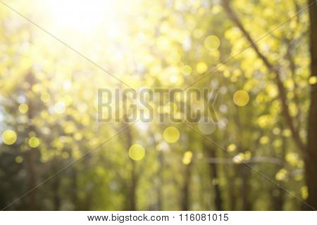 Abstract nature background,Blur trees and sunlight.