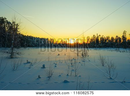 Winter Snow-covered Swamp In Siberia  Sunset .