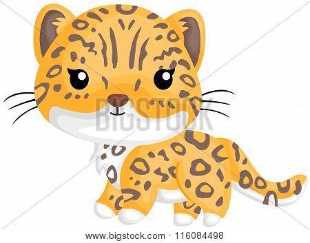 Cute Little Jaguar