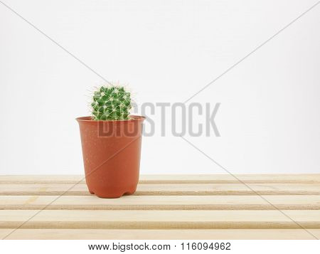 The little green cactus in small plant pot on wooden tray