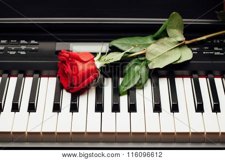 piano keys and red rose