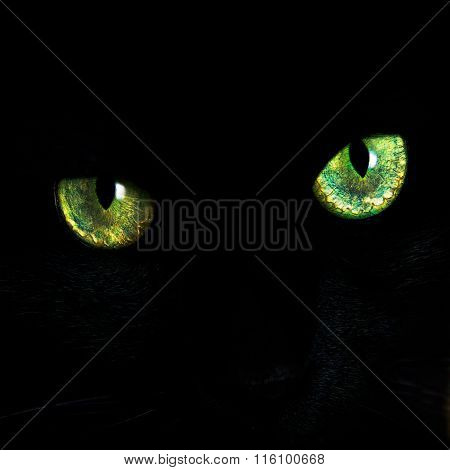 Eyes of a black cat