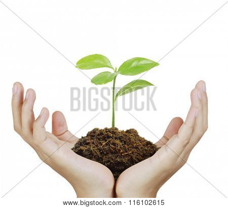 Man holding plant in a hand