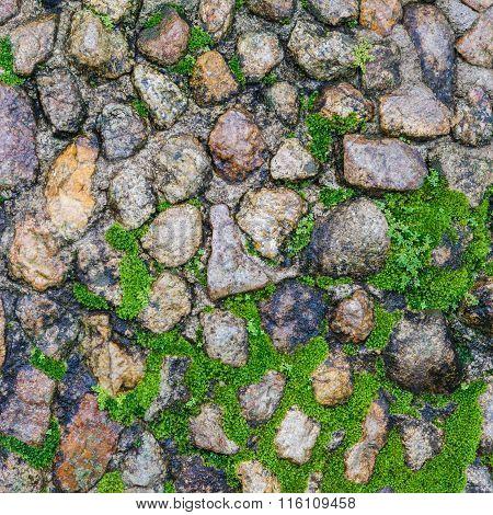 Stone Floor With Moose