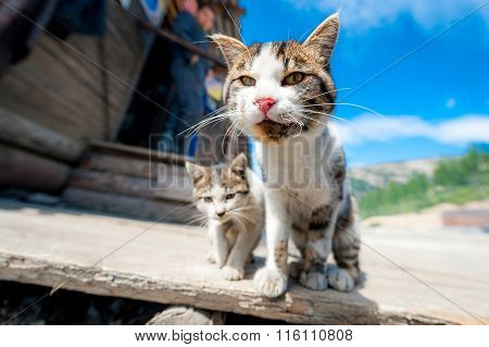 A pair of pitiable homeless cats