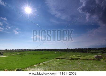 Fresh terrace rice field under cloudy blue sky