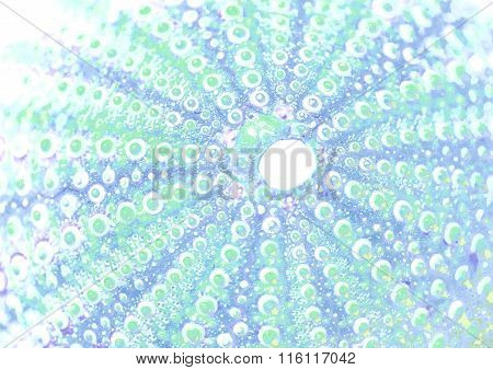 Abstract Background See Urchin