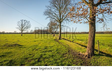 Row Of Leafless Trees On A Sunny Day In Winter