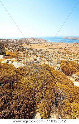 Plant  In Delos