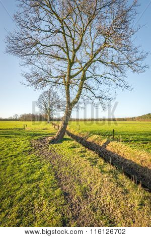 Whimsically Shaped Crooked Tree In The Wintry Sunlight