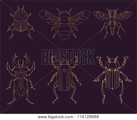 Set Of The Vector Insects. Vector Design Elements.