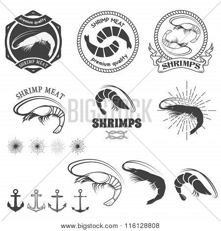 Shrimps Logos In Vector.