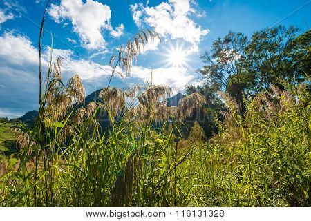 Mountain Greenery Landscape With Colorful Forest