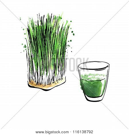 Watercolor Illustration Of Wheatgrass