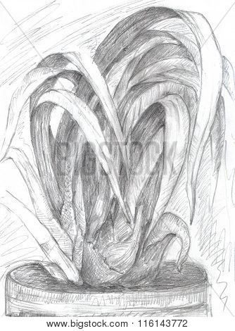 Cymbidium orchid flower hand drawn. Pen orchid
