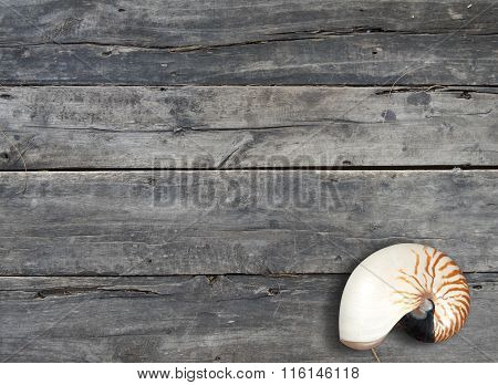 nautilus pompilius on wooden background with copy space. Top view.