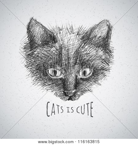 cat face sketch