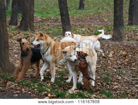 Funny Dog Company