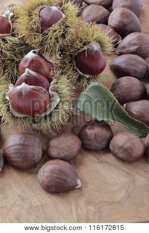 Chestnuts With Their Outward Prickly Rind