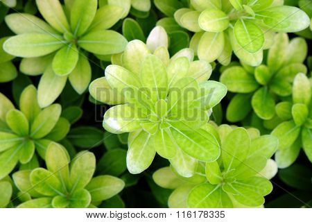 Green bush background