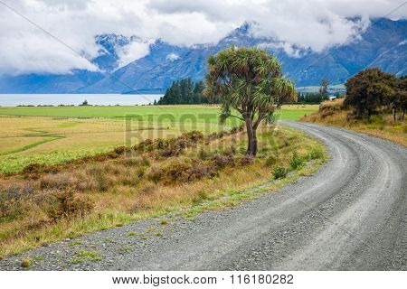 Winding gravel road through pasture in New Zealand with cabbage tree and cloudy mountains in background