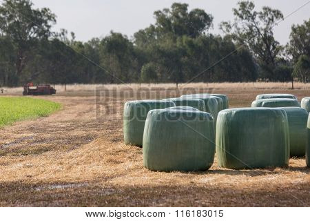 Baleage - Round Hay Bales Wrapped In Plastic