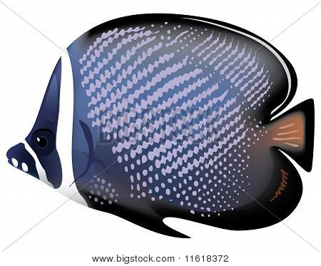 Tropical Fish Chaetodon Collare. Vector Illustration.