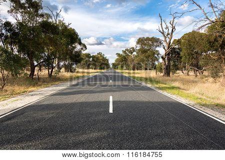 Road Through Dried Crops
