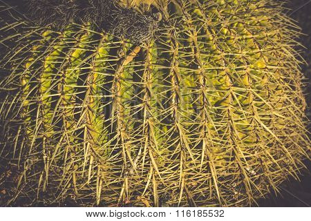 Round Succulent Plant Cactus Growing On A Stones Ground