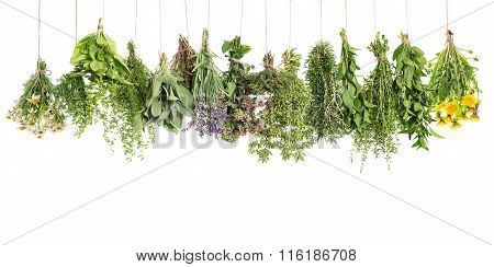 Herbs Hanging Isolated On White. Basil Rosemary Thyme Sage Mint