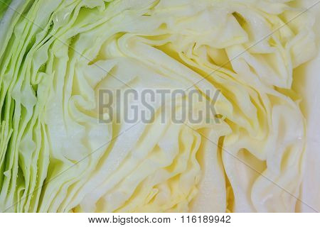 White Cabbage, Texture Of Cut White Cabbage Showing Inside Curly Surface.