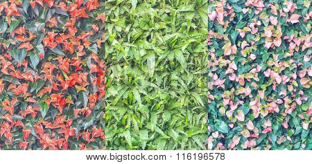Colorful Wall Of Spadix Flowers, Selective Focus