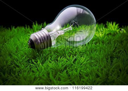light bulb on artificial green grass