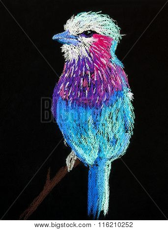 Beautiful parrot on a dark background.