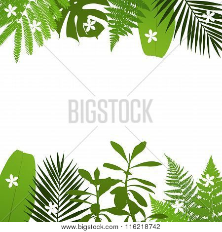 Tropical leaves background with palmfernmonsteraacacia and banana leaves. Vector illustration