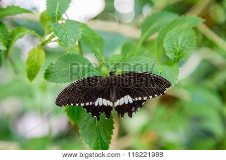 Black And White Butterfly On Green Leaf