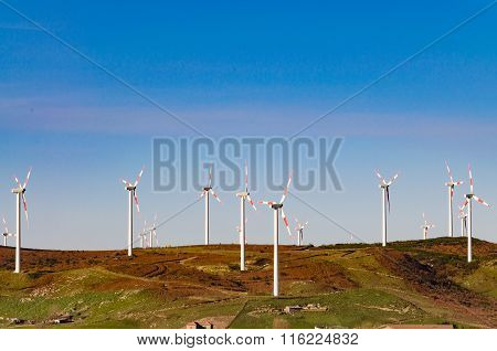 The Wind Farm