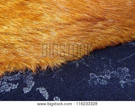 ginger fur on a blue cashmere