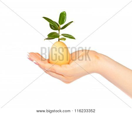 Woman Holds An Egg With A Germinating Ficus On A White Background