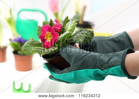 Flower seedling, separating the root system.