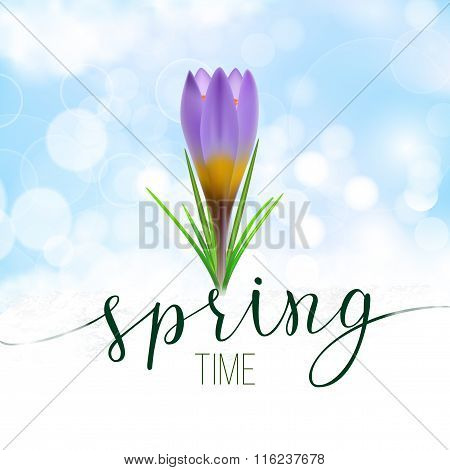 Spring Greeting Card With Violet Crocus