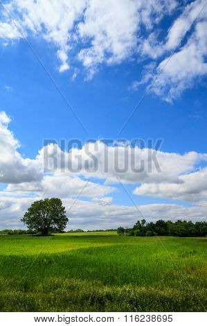 Vertical Grassland Field