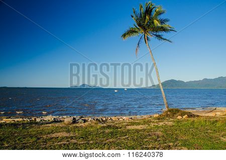 Coconut Palm At The Beach