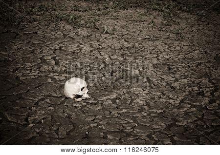 Still Life Skull On Soil