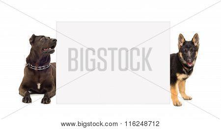 Staffordshire terrier and puppy German shepherd peeking from behind banner