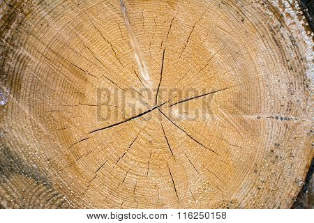 Wood rings texture